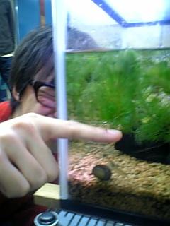 熱帯魚好き?
